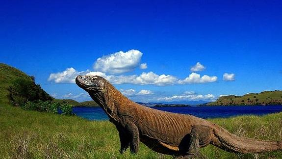 Pulau-Komodo.jpg