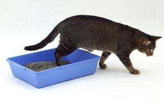 cat-stop-using-the-litter-box0.jpg